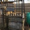 Ref. 36 – Antieke landelijke smeedijzeren tuinpoort, oude ijzeren poortdeur foto 2
