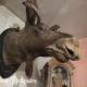 Ref. 58 – Oude elandkop foto 1