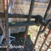 Ref. 98 – Kleine smeedijzeren tuinpoort foto 2